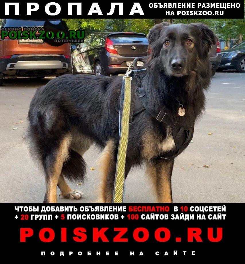 Пропала собака кобель награда 50 000 Москва