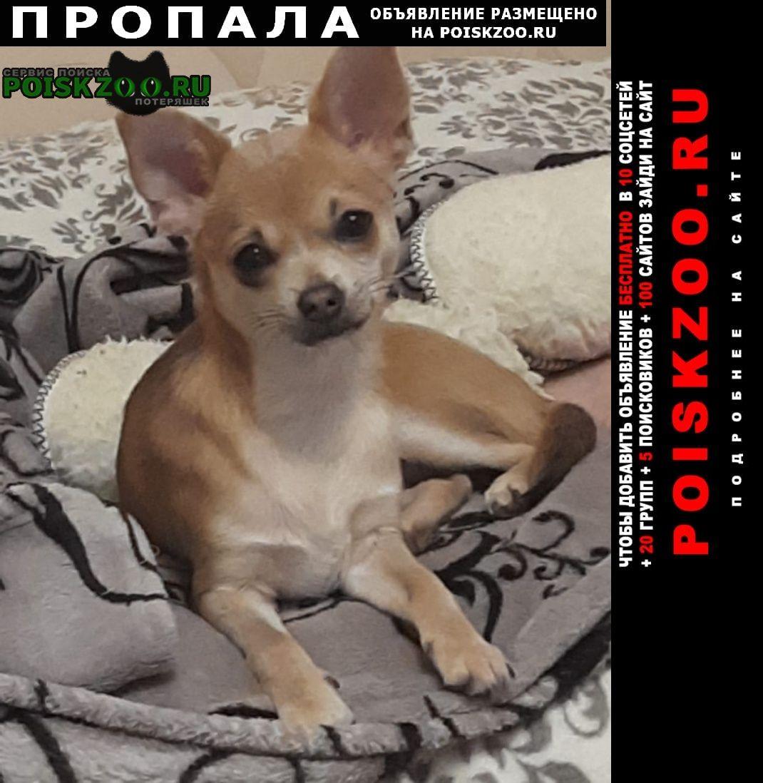 Пропала собака Ленино