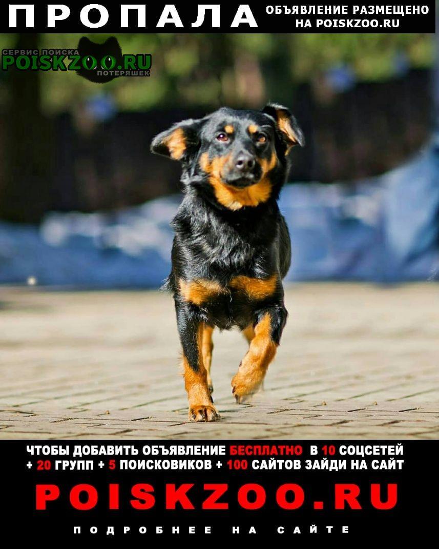 Пропала собака 29 мая, вышла на станции голицыно Одинцово