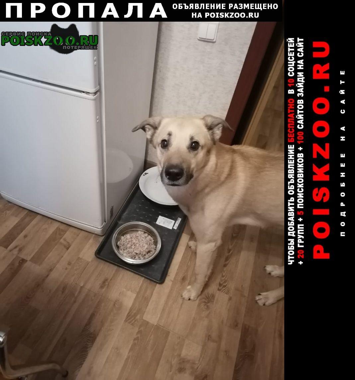 Пропала собака кобель Пушкино