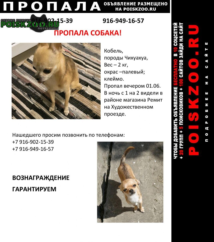 Пропала собака кобель Подольск