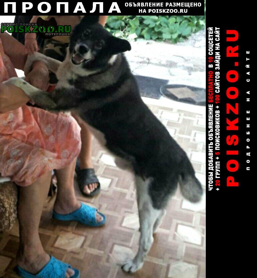 Пропала собака кобель пёс в симферополе старый город Симферополь