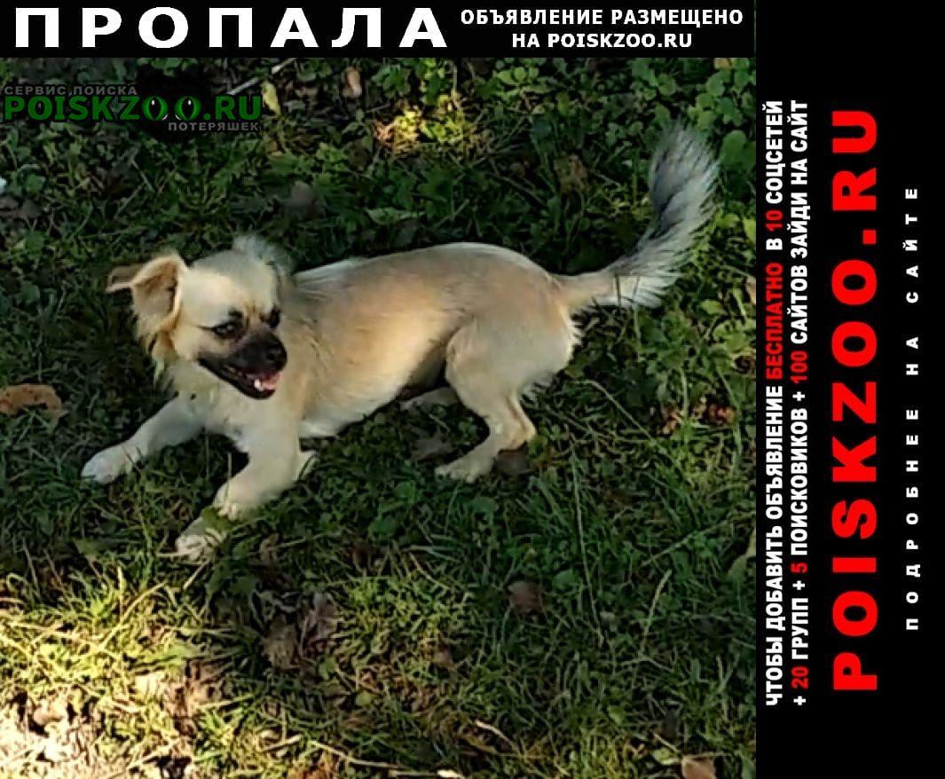 Пропала собака помогите найти Черкесск Карачаево-Черкесская Республика