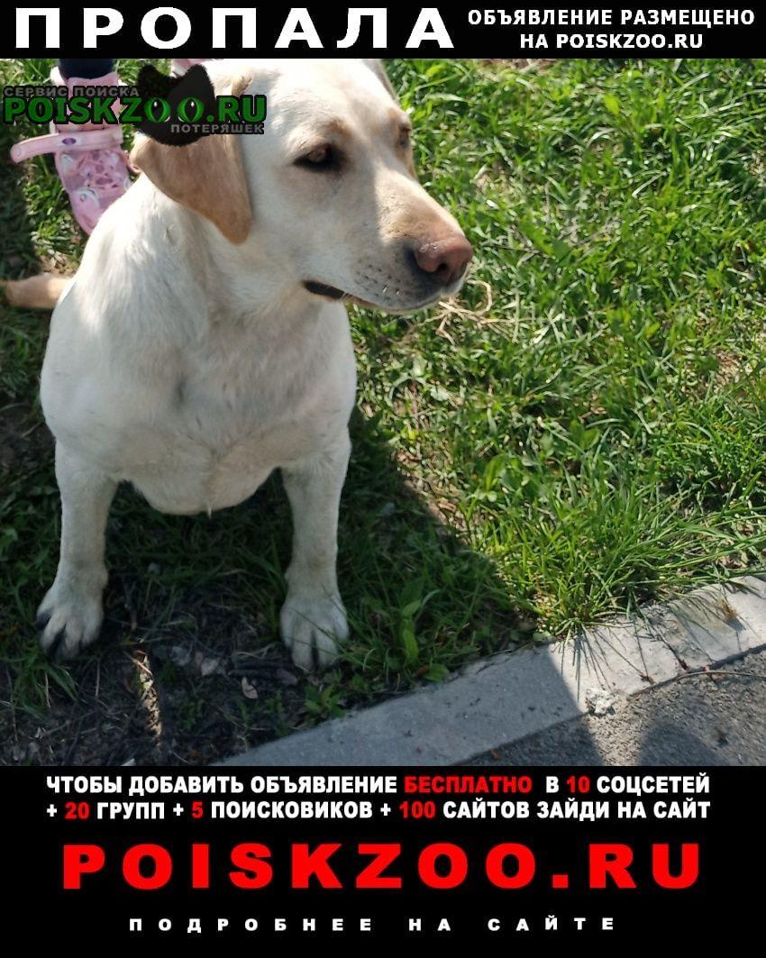Пропала собака 08 июня 2021 потерялась лабрадор Тюмень