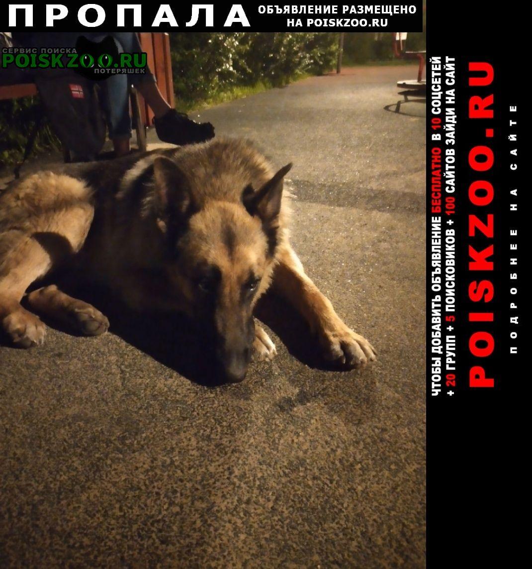Пропала собака кобель метис овчарки из новокосино Москва