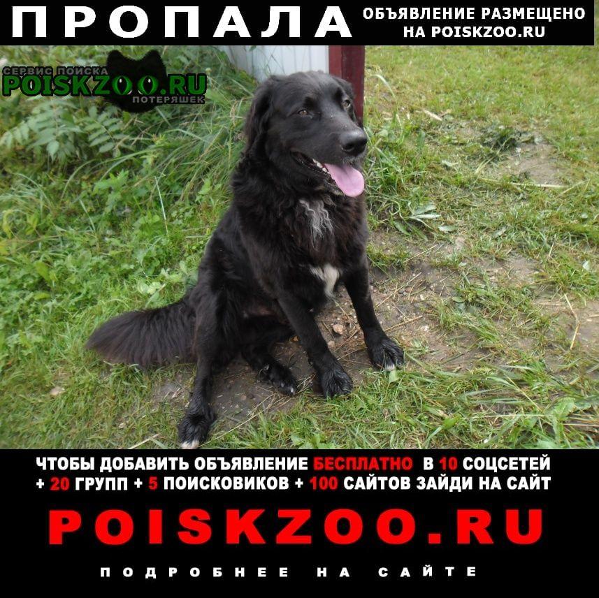 Пропала собака кобель наша собака по кличке мальчик Дорохово