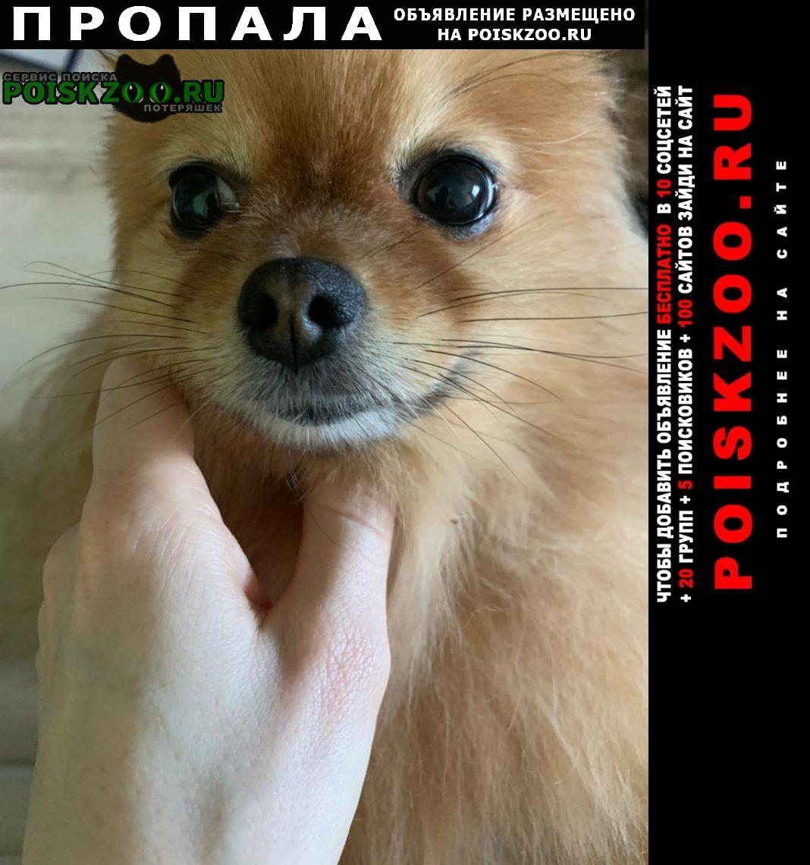Пропала собака маленькая, очень добрая Истра