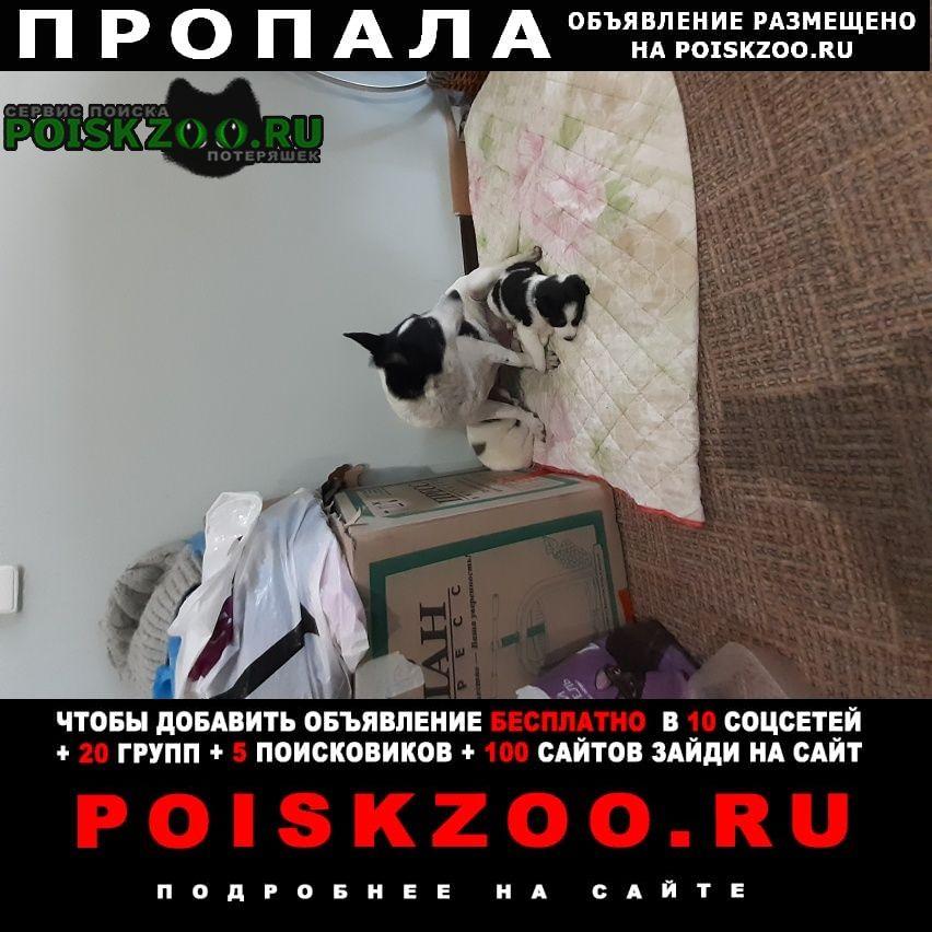 Пропала собака Старый Оскол