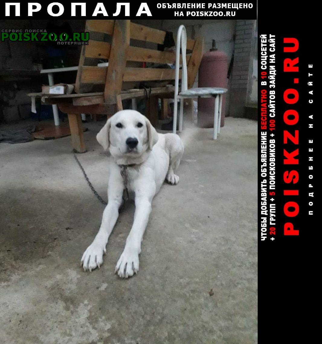 Пропала собака девочка помесь лабрадора лууна Адлер