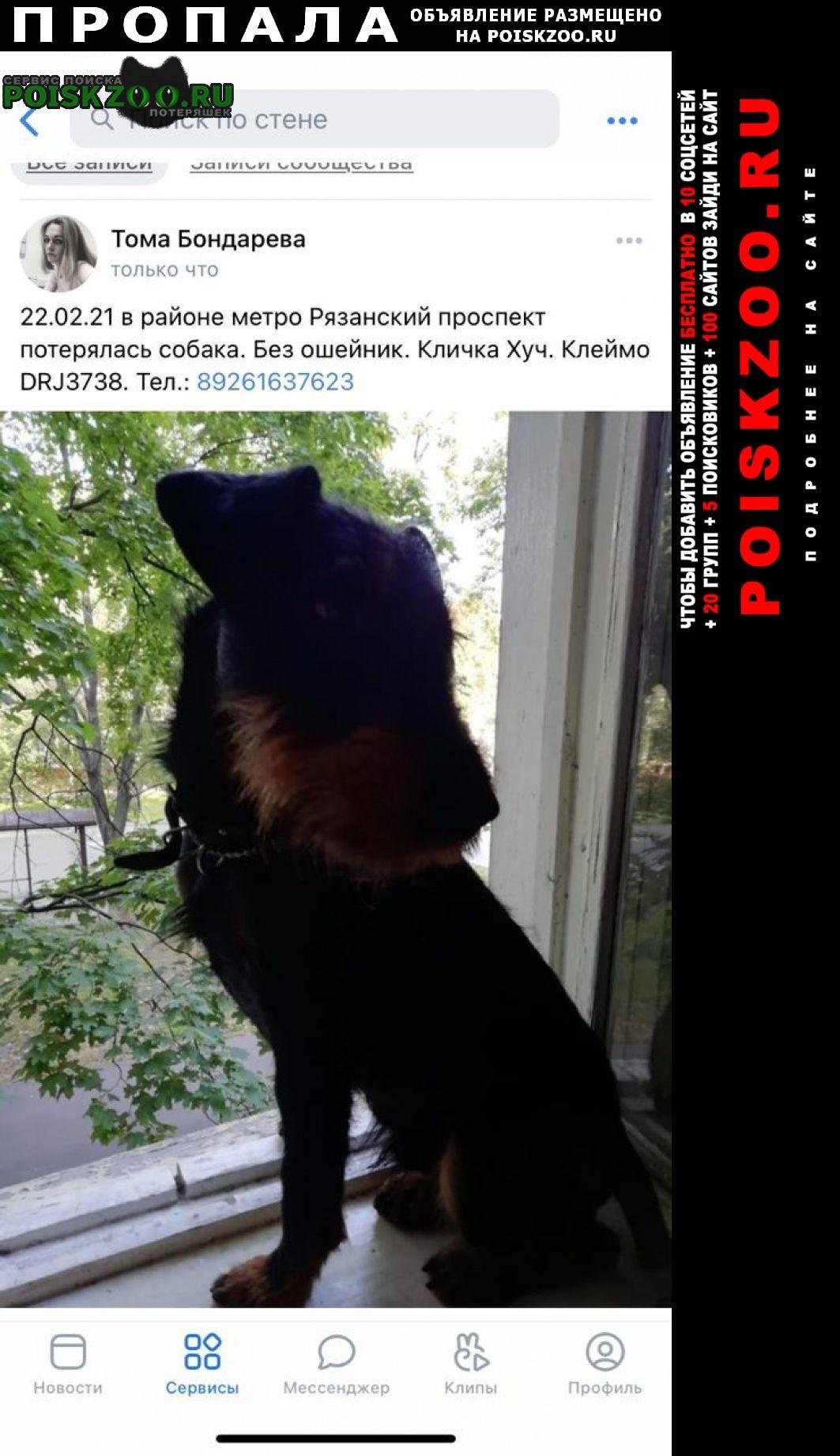 Пропала собака кобель сбежал. Москва