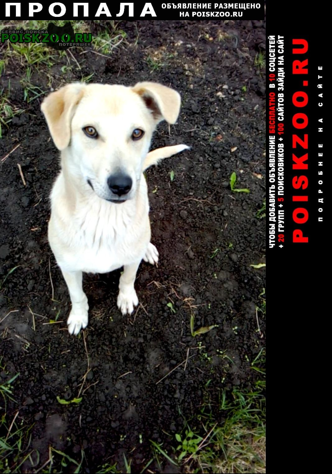 Пропала собака в районе филипповки Кропоткин