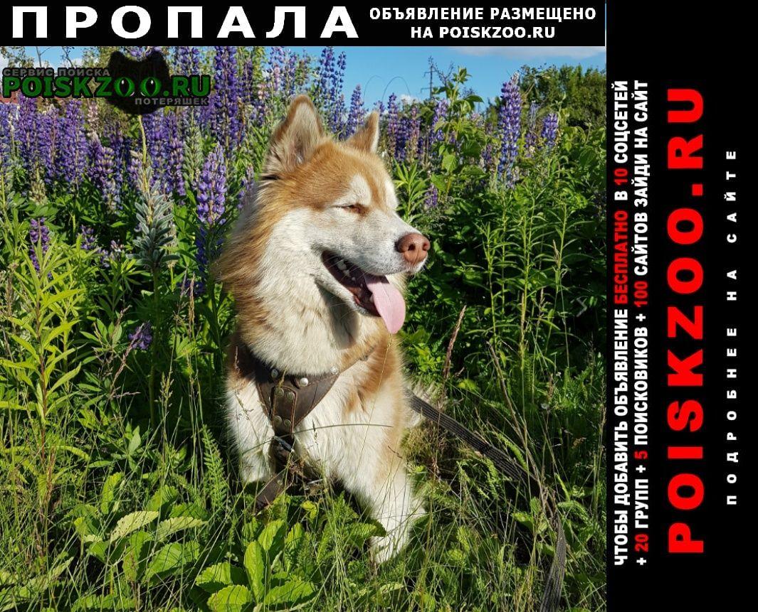 Пропала собака кобель Воронеж