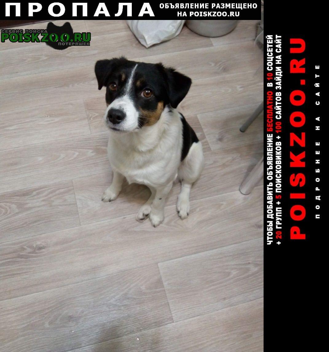 Пропала собака кобель пёс в районе сот урьево Лангепас