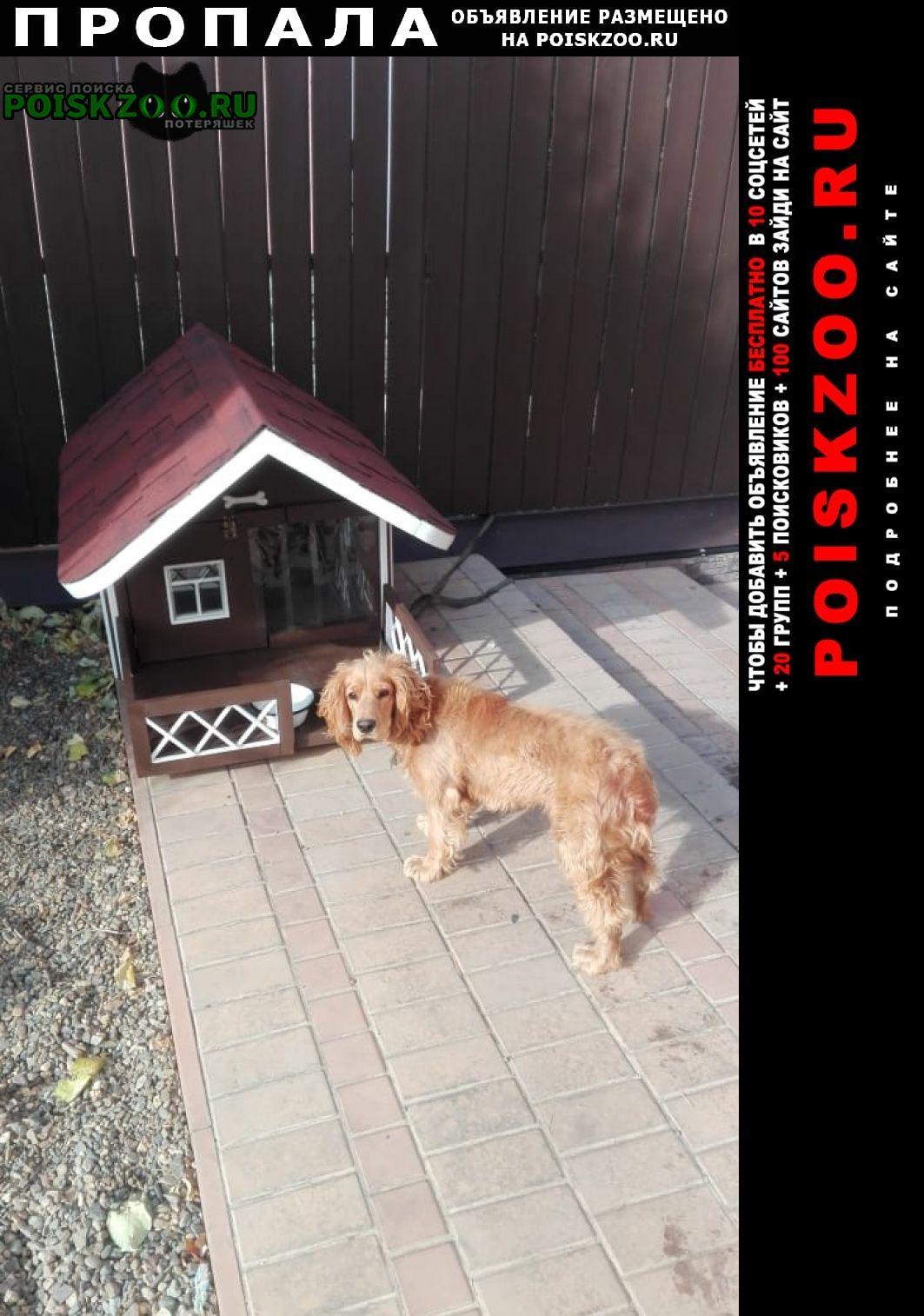 Пропала собака кобель кличка чапик Оренбург