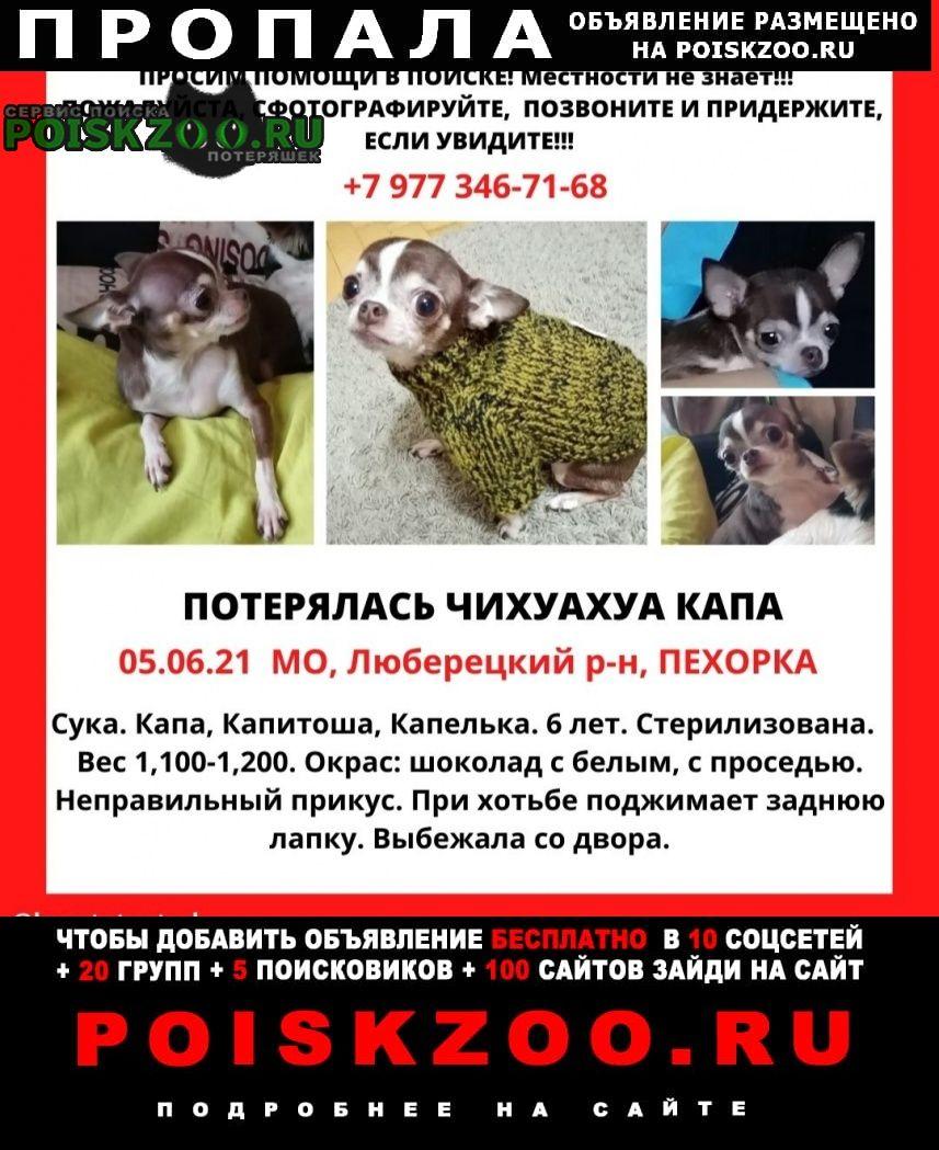 Пропала собака Малаховка