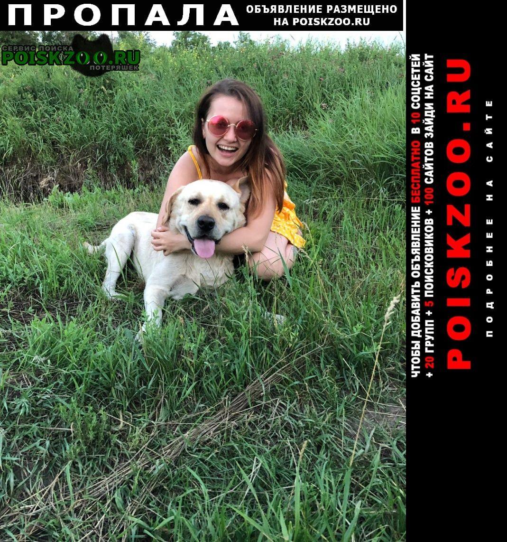 Пропала собака кобель лабрадор Таганрог