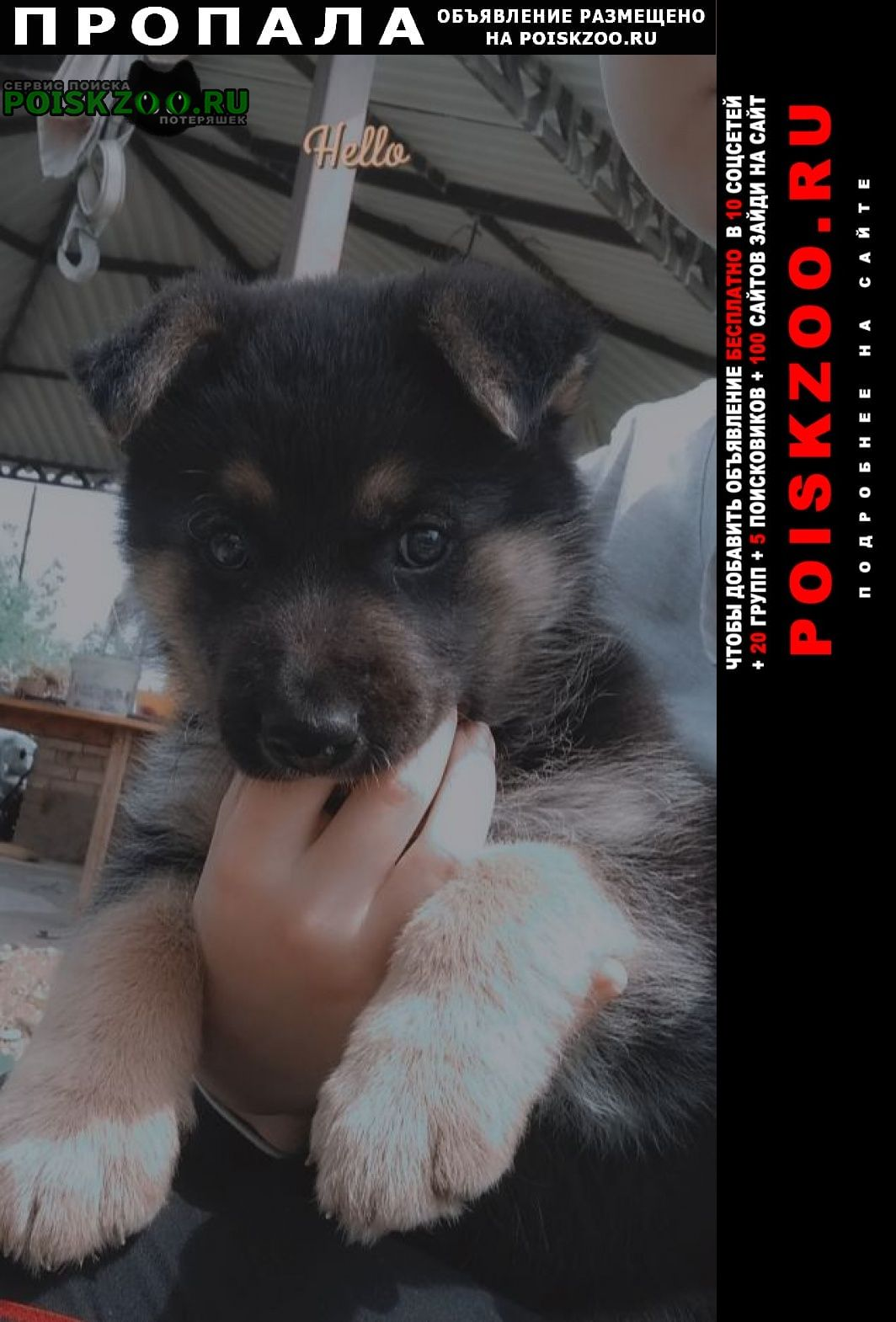 Пропала собака кобель метис немецкой овчарки Краснодар