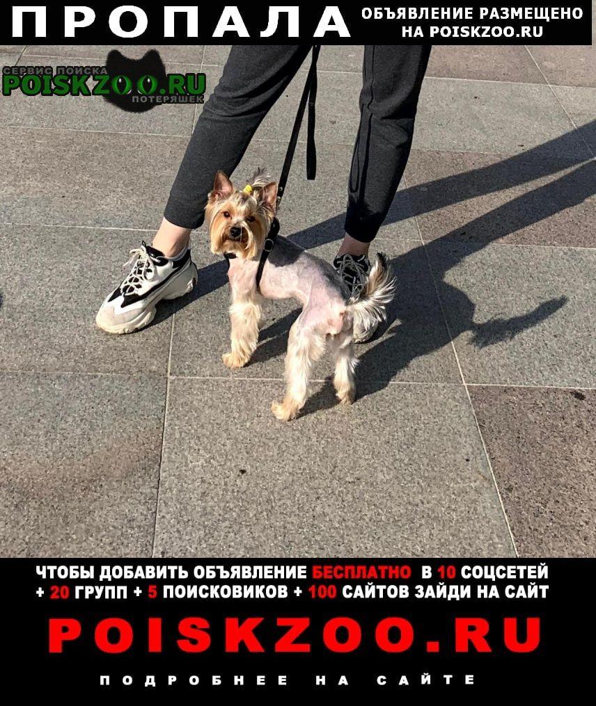 Пропала собака кобель. Санкт-Петербург