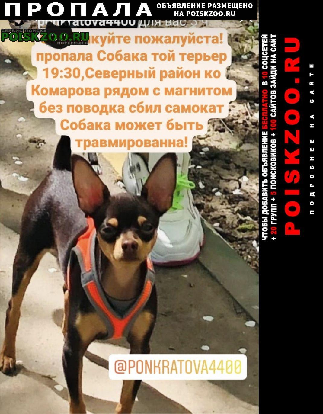 Пропала собака кобель на ул комарова 9(магнит) Ростов-на-Дону