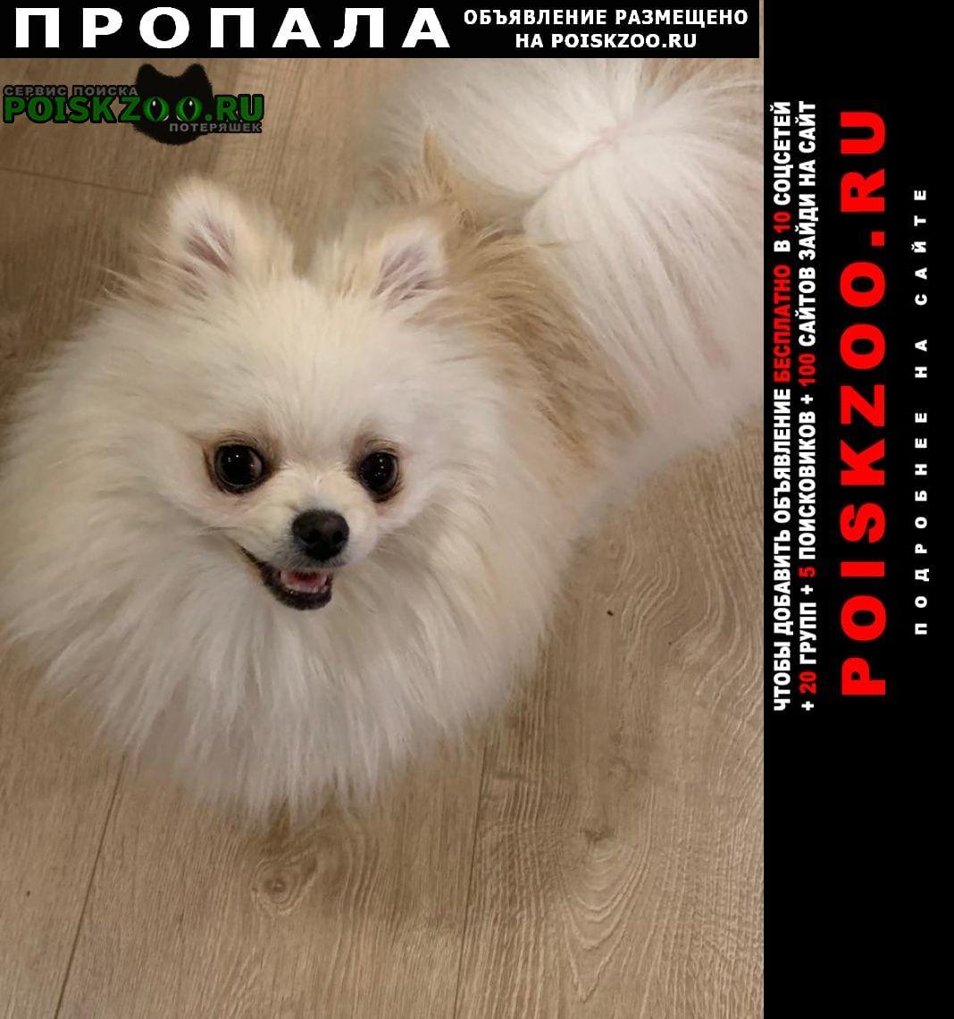 Пропала собака кобель друг Омск