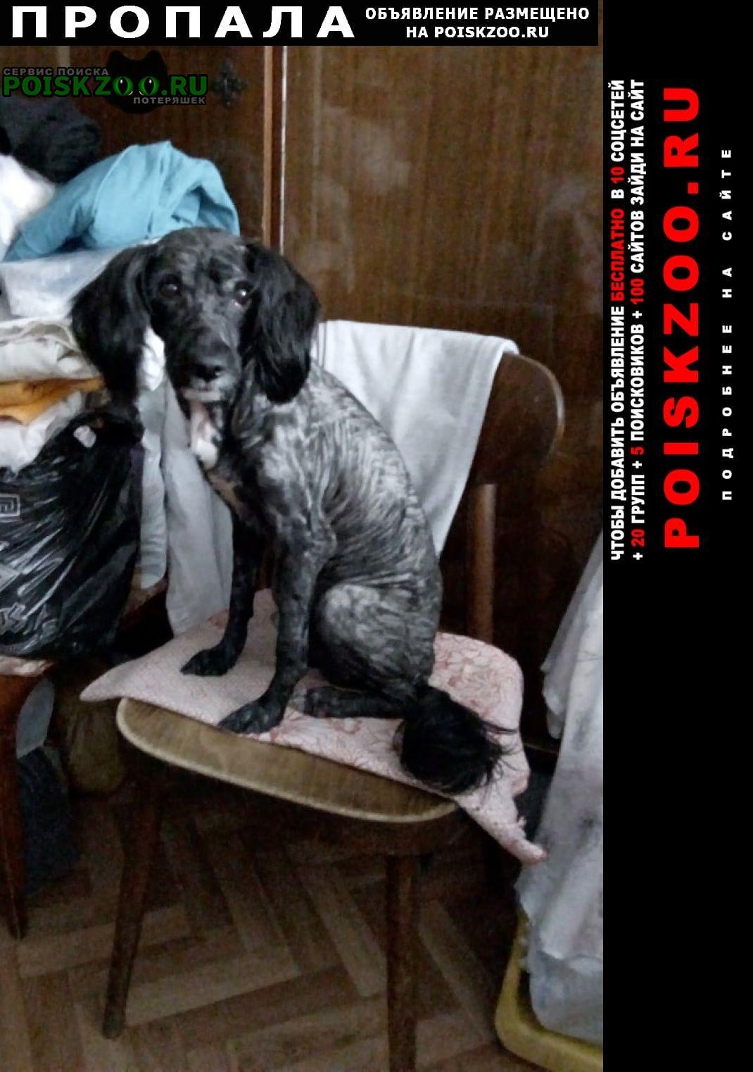Пропала собака кобель пёс Пермь