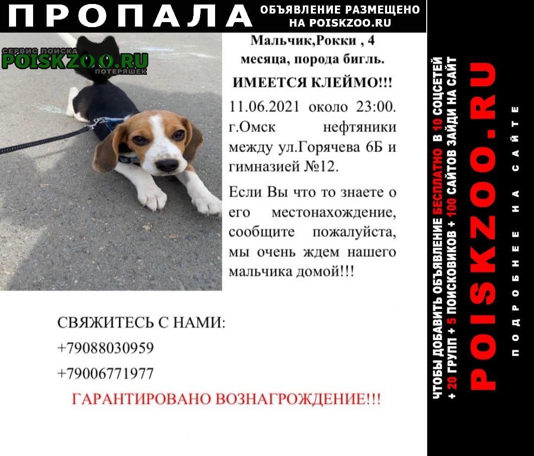 Пропала собака по кличке рокки. Омск