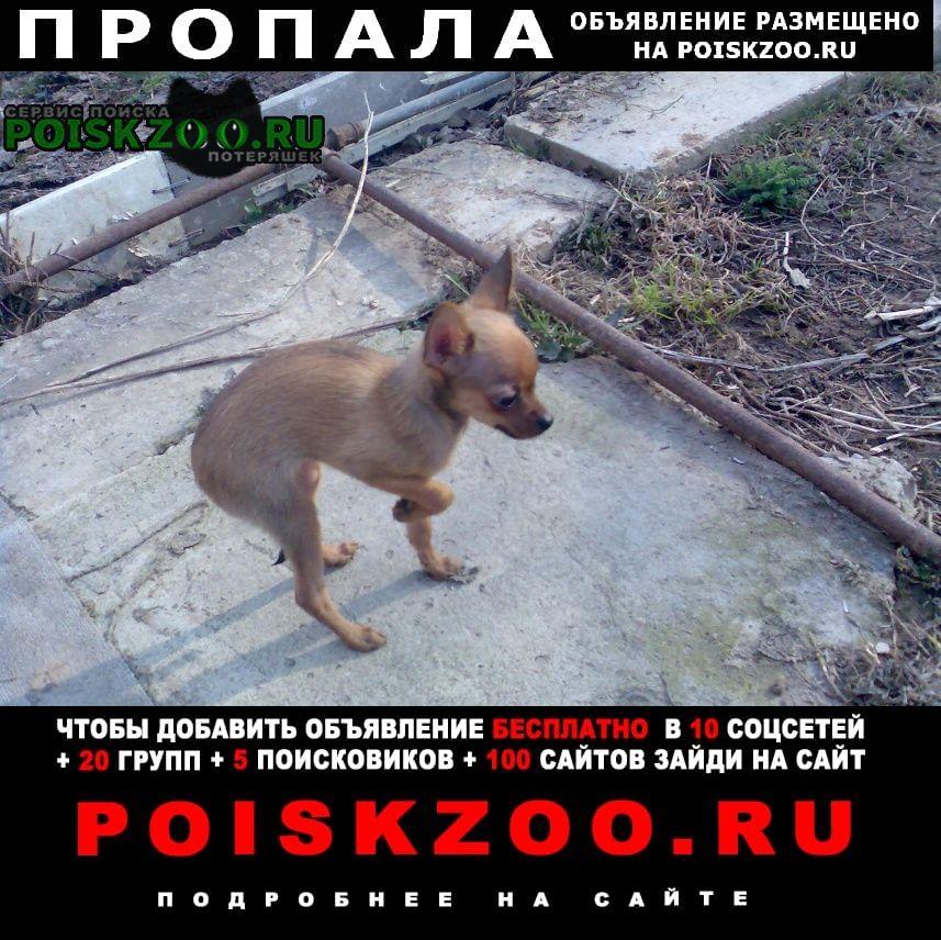Пропала собака помагите Москва