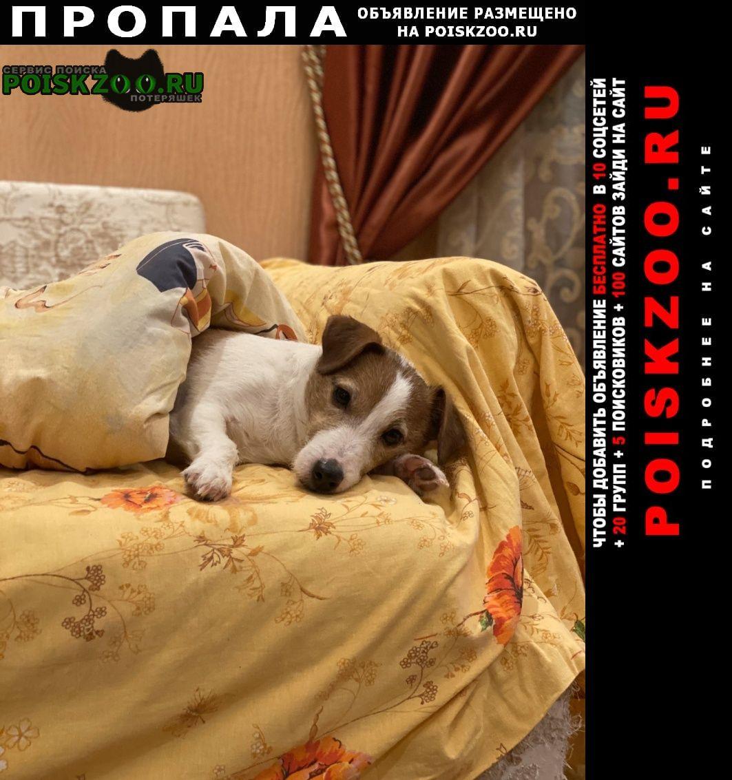 Пропала собака кобель Большое Козино