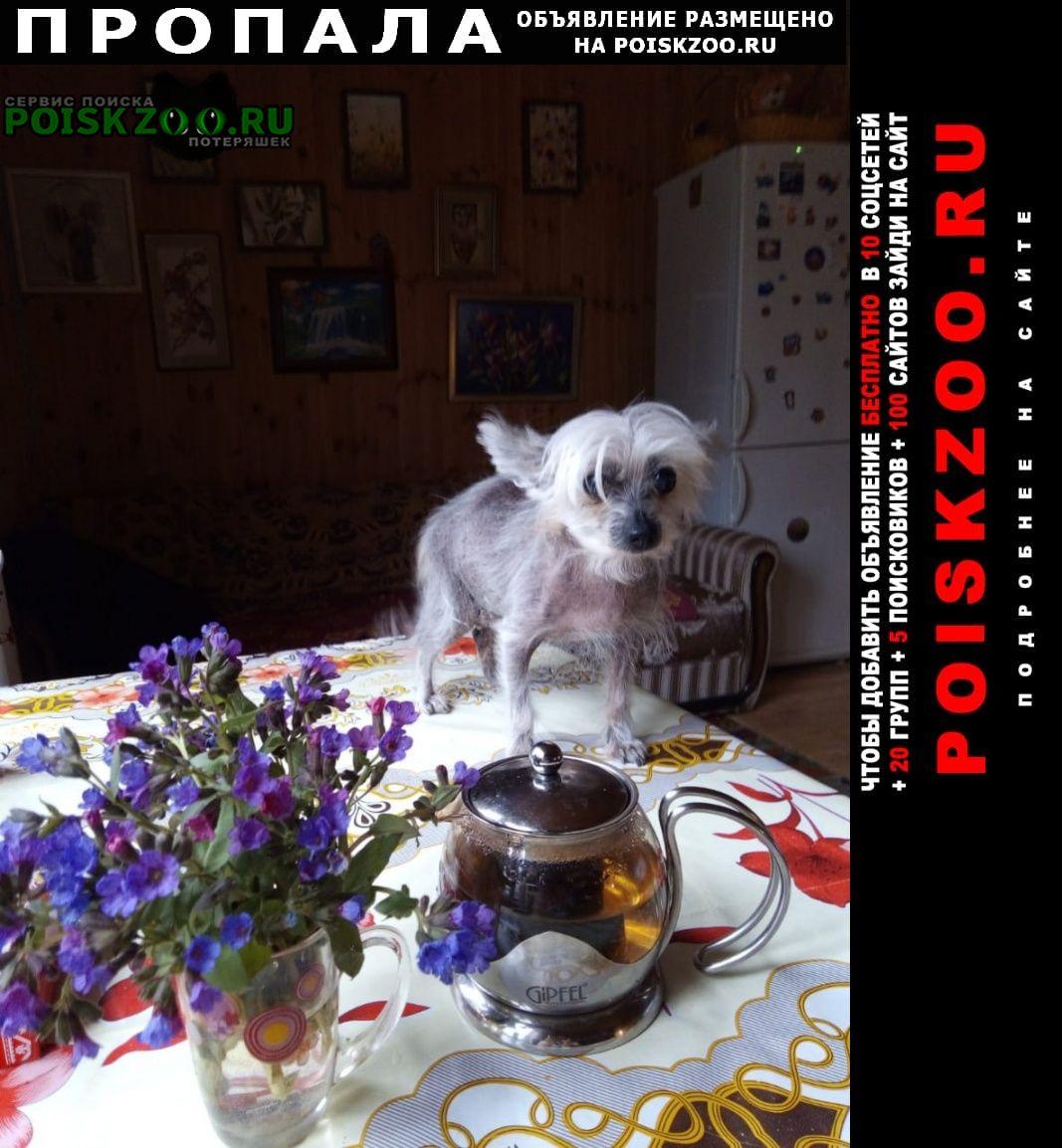Пропала собака туся Солнечногорск