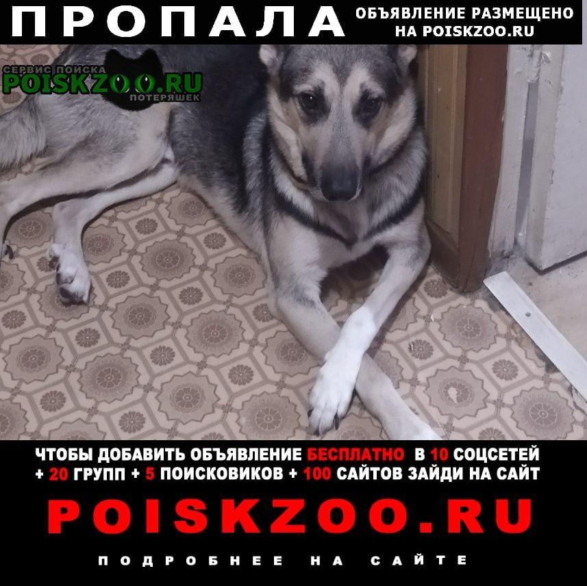 Пропала собака кобель внимание Плавск
