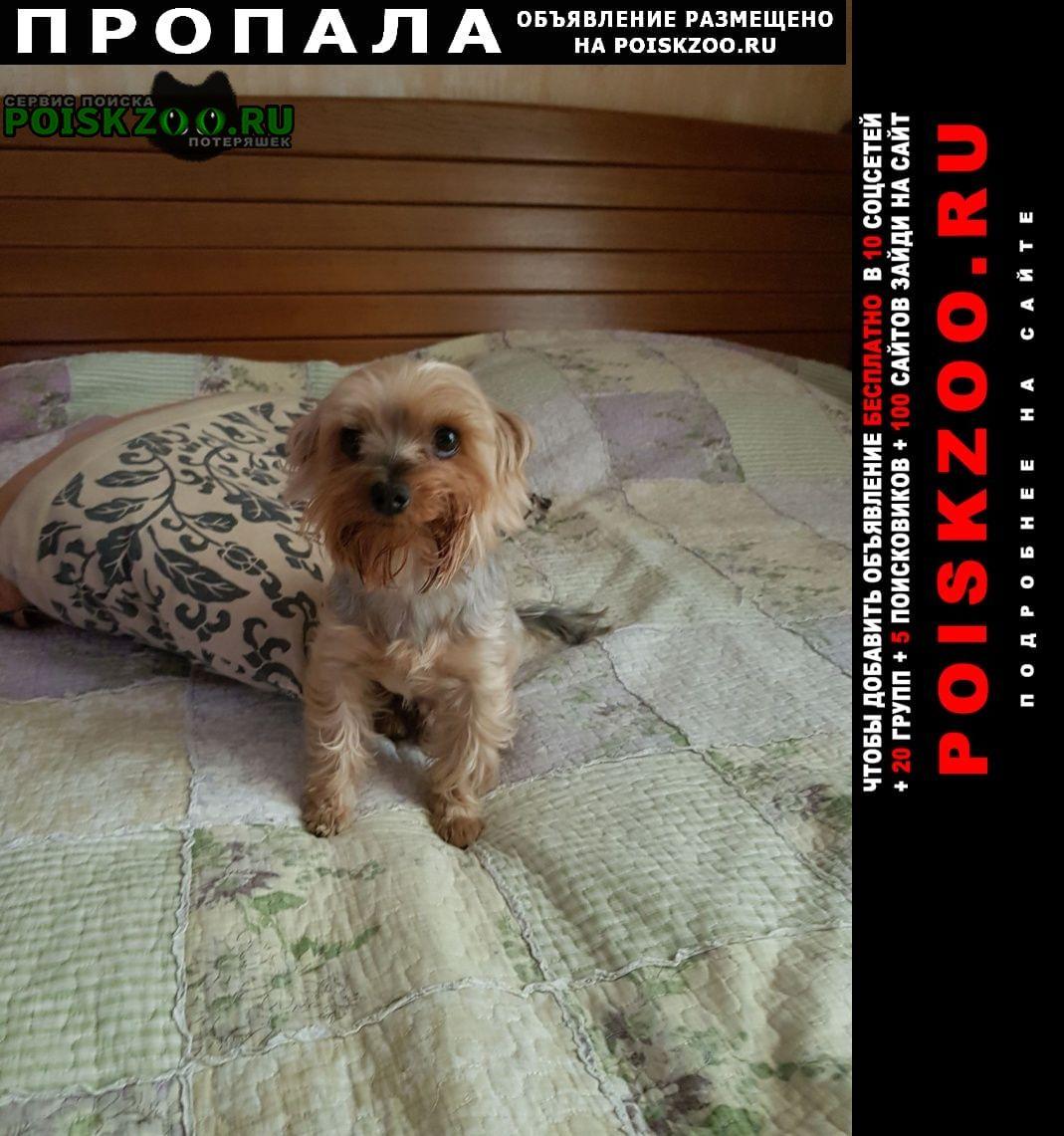 Пропала собака кобель йоркширский терьер Севастополь