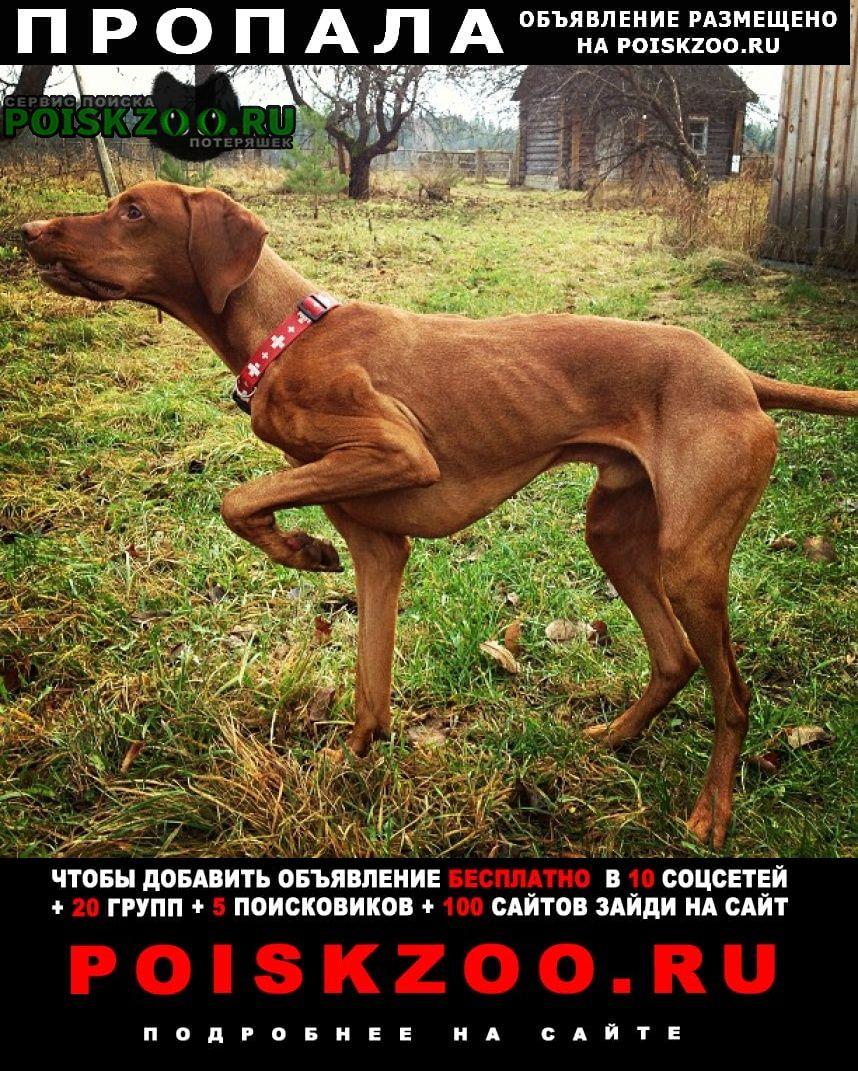 Пропала собака кобель Икша