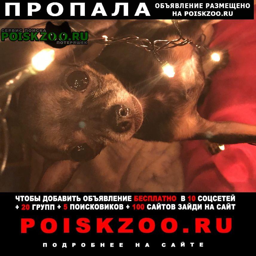 Пропала собака кобель Семилуки