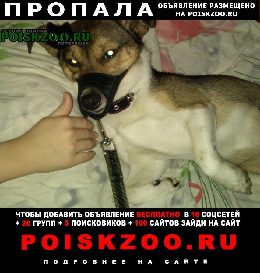 Пропала собака кобель Томск