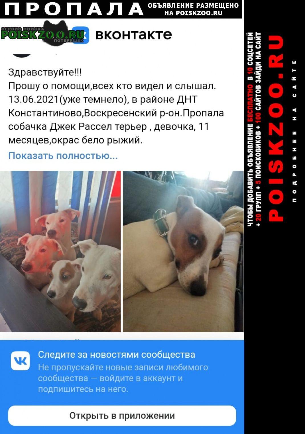 Пропала собака джек рассел терьер девочка Воскресенск