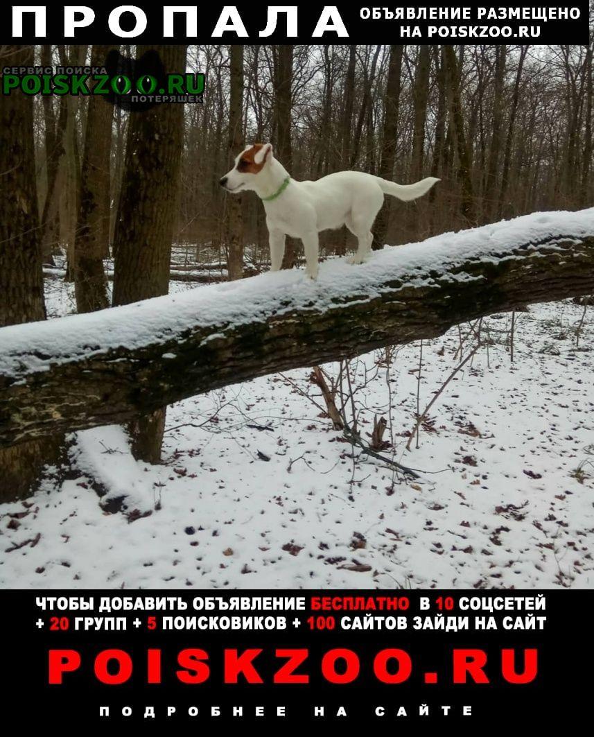 Пропала собака Изюм