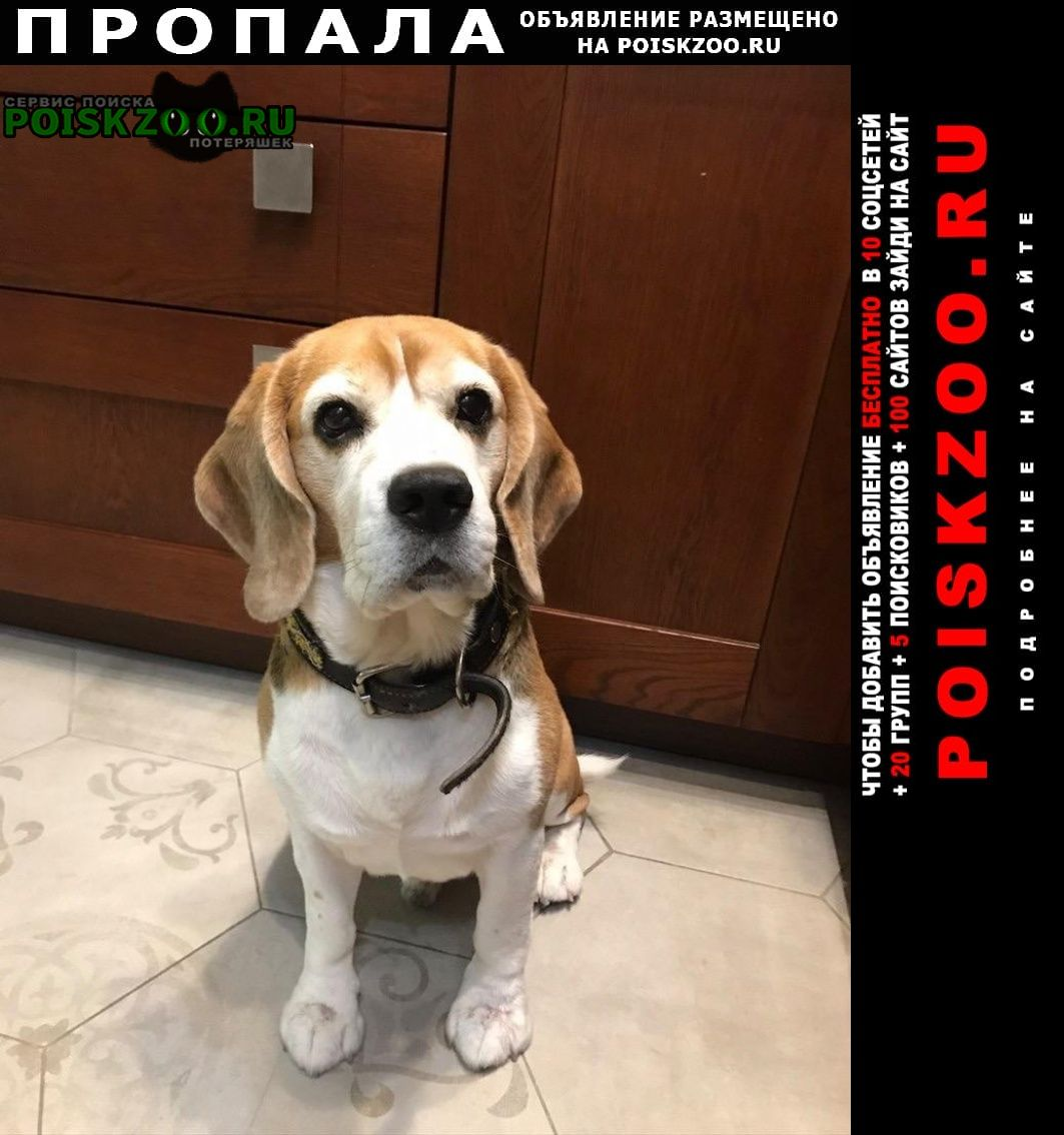 Пропала собака кобель метро прокшино Москва