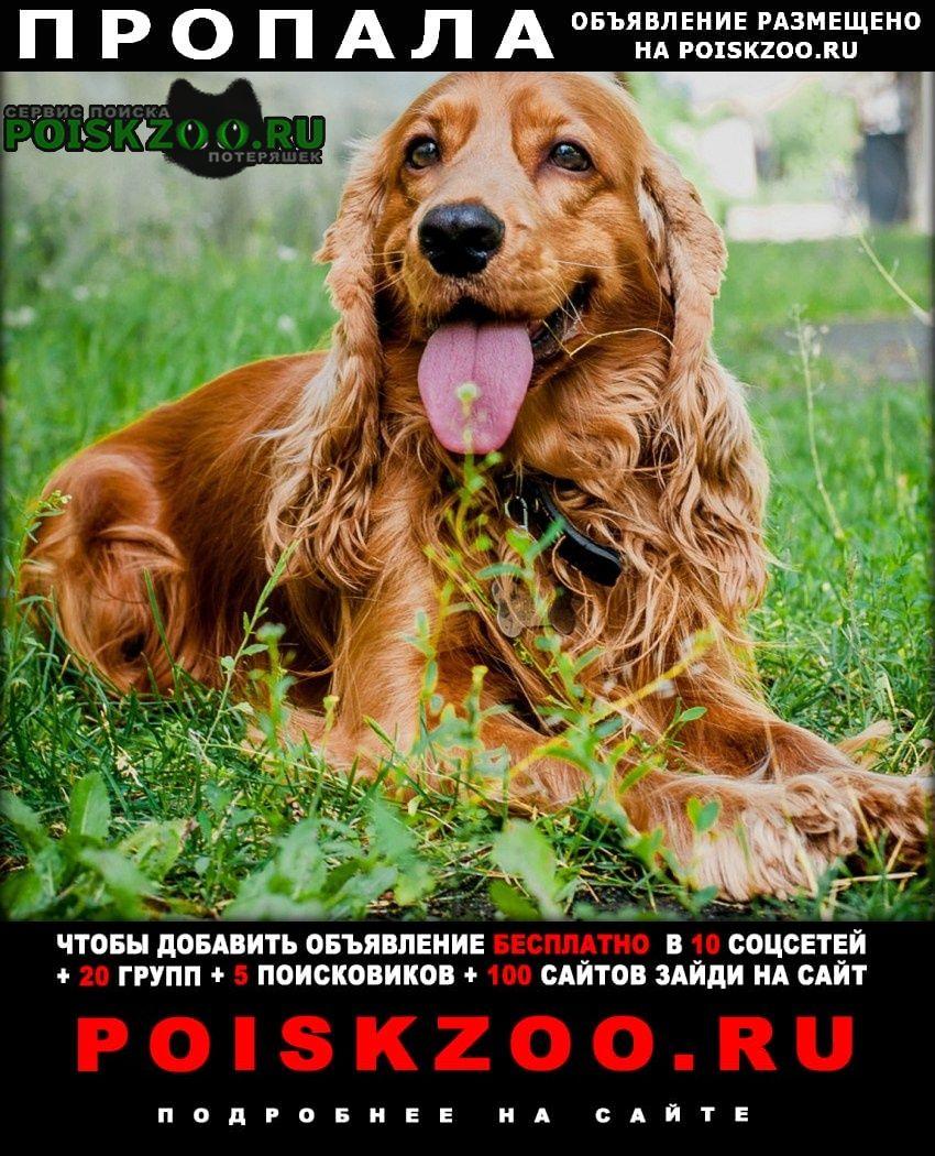 Пропала собака кобель рыжий спаниель Ейск