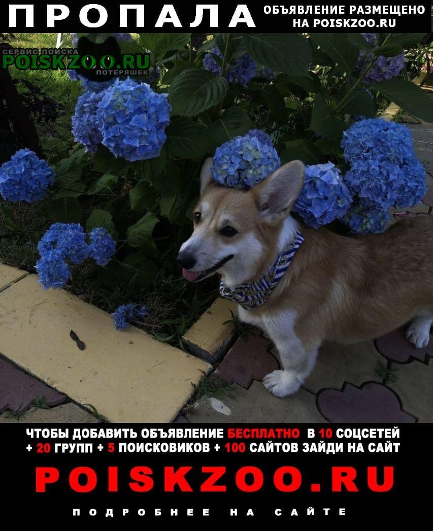 Пропала собака простм помощи Сочи