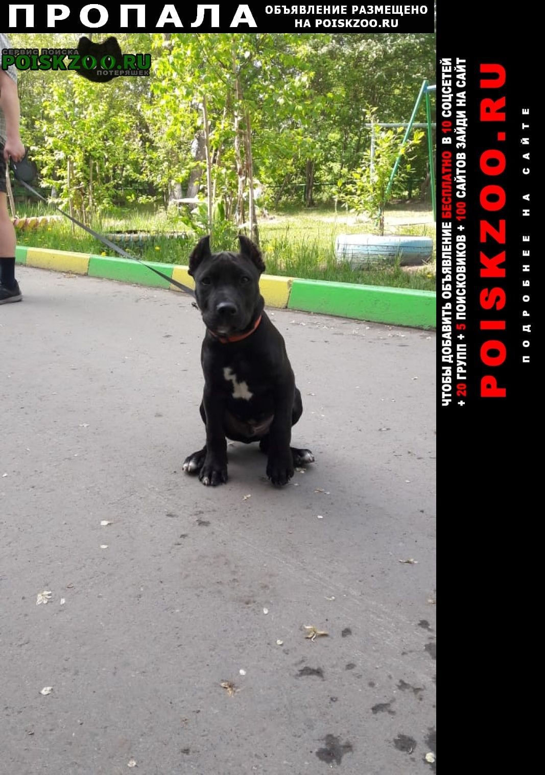 Пропала собака кобель Омск