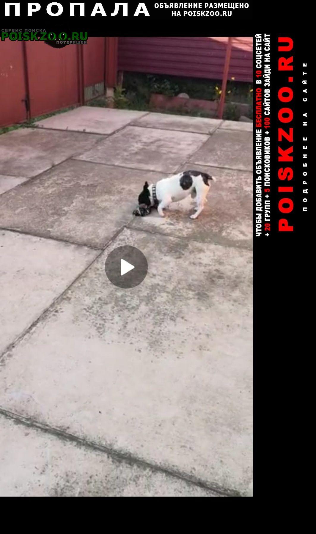 Пропала собака кобель срочно Армавир