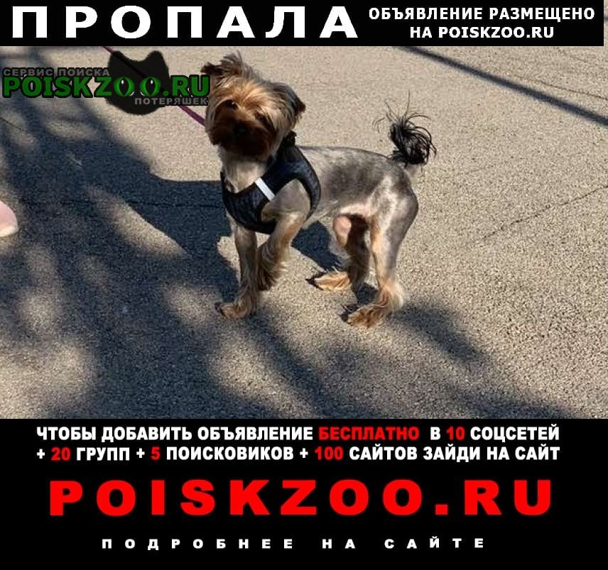 Пропала собака Самара