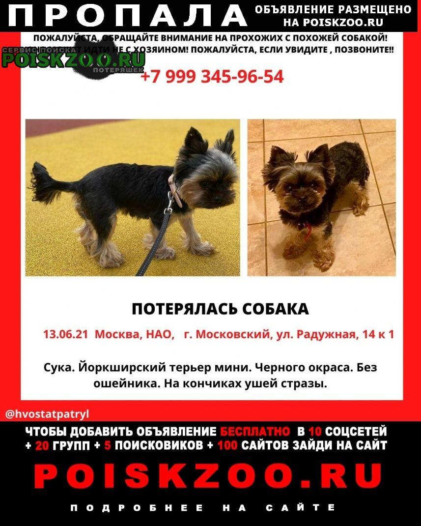 Пропала собака йорк ( девочка) Московский