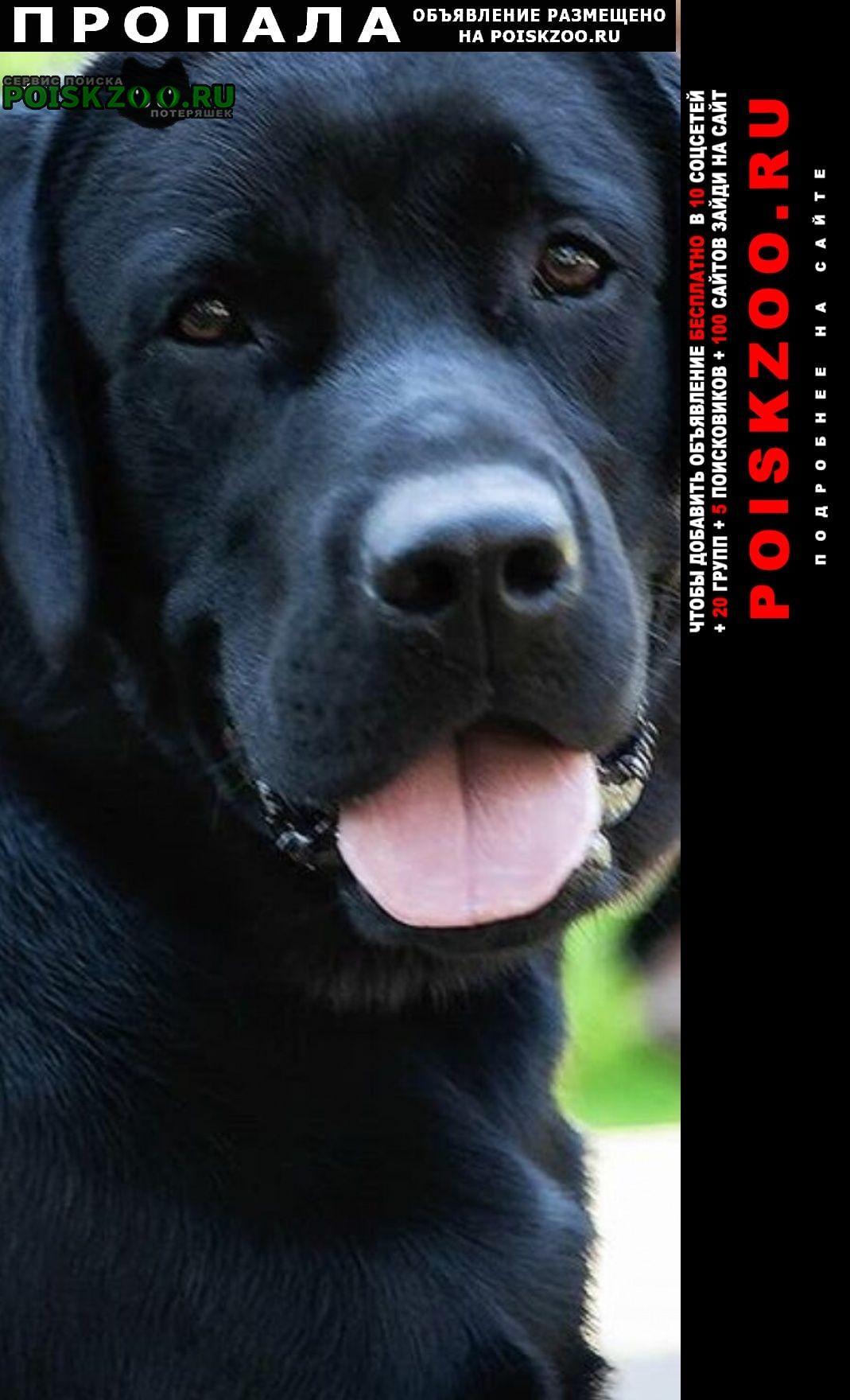 Пропала собака кобель попал лабрадор Сочи
