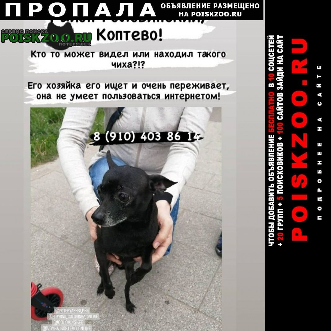 Пропала собака кобель той терьер Москва