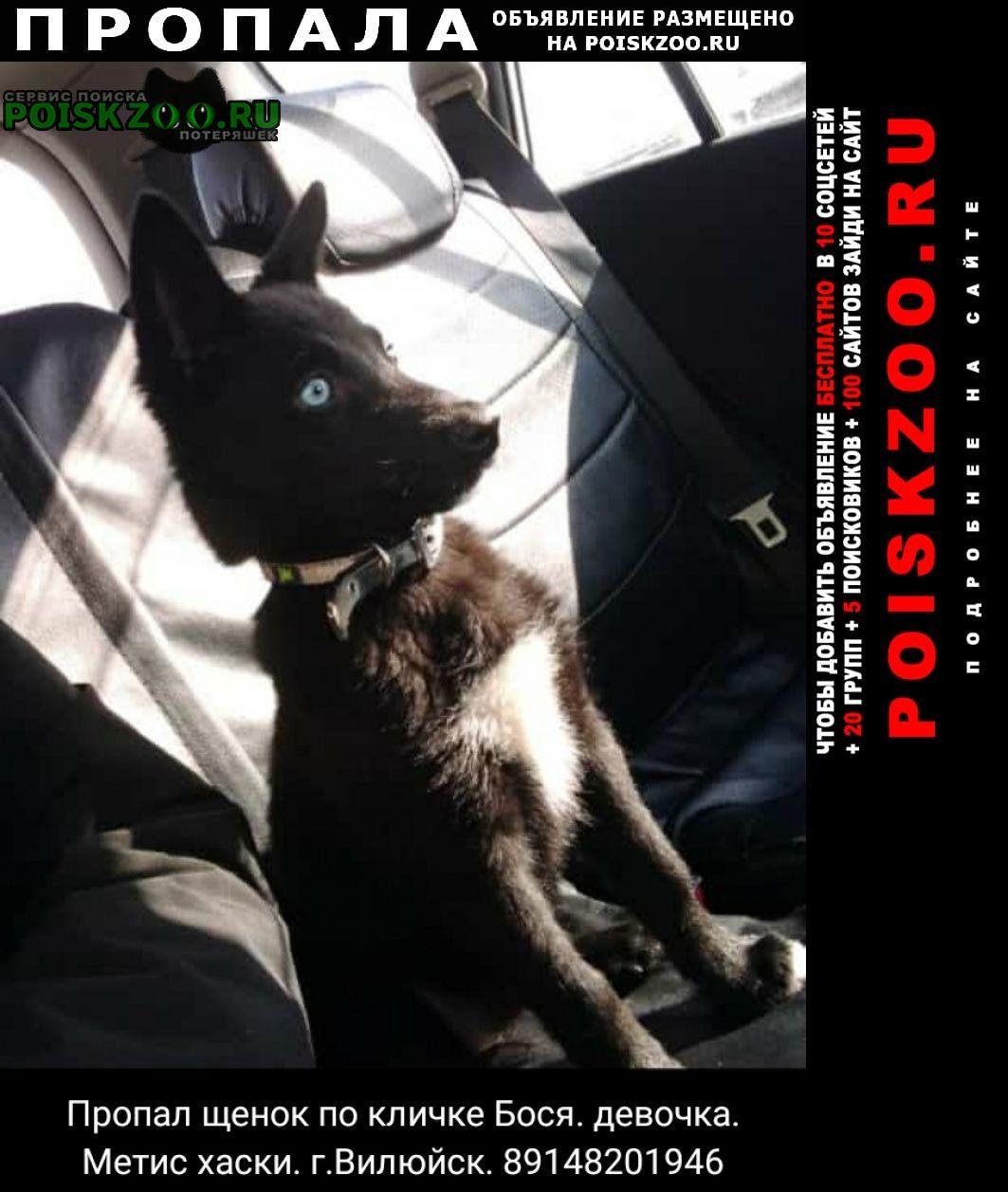 Пропала собака девочка бося Вилюйск