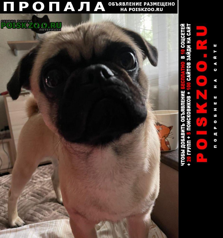 Пропала собака кобель помогите, пожалуйста, найти собаку. мопс Чита