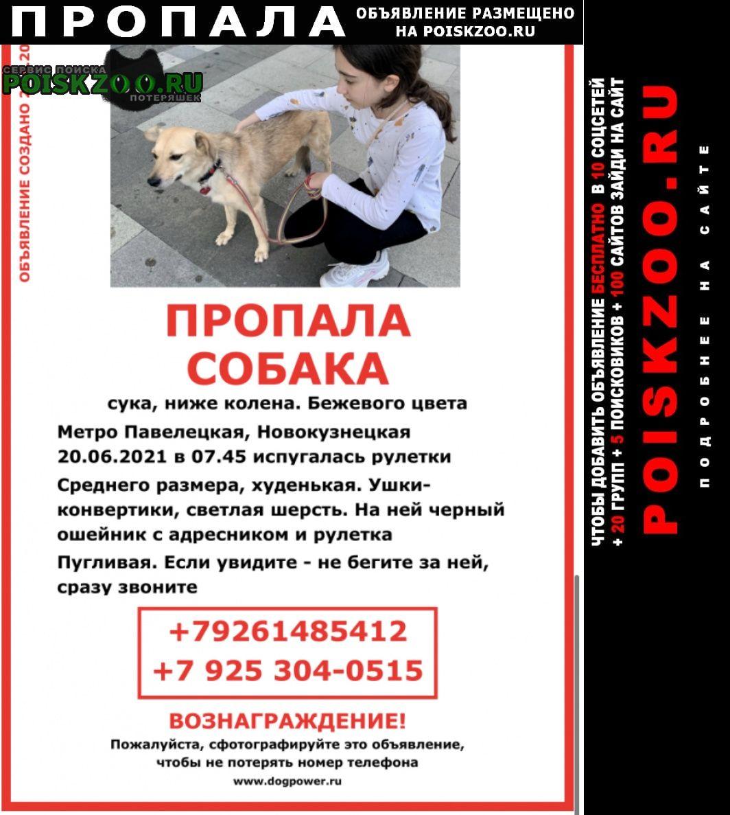 Пропала собака кличка мия Москва