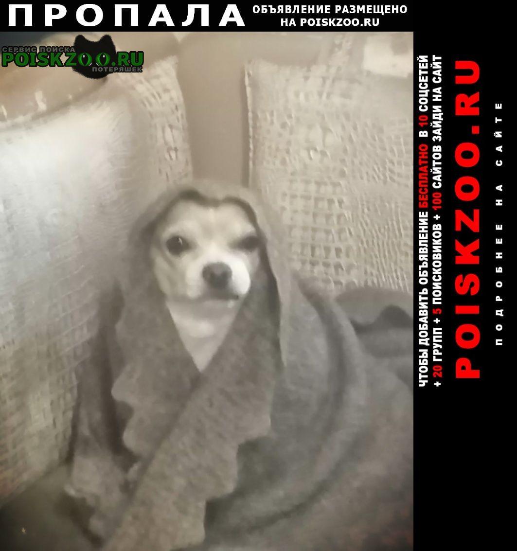Пропала собака кобель чихуахуа, мальчик, 9 лет, Пермь