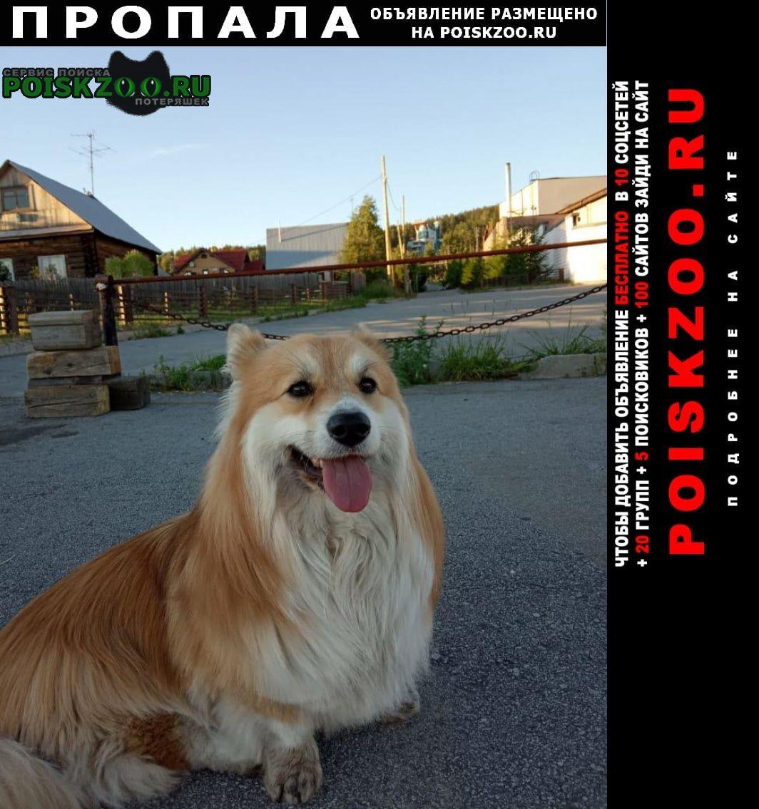 Пропала собака кобель. Екатеринбург